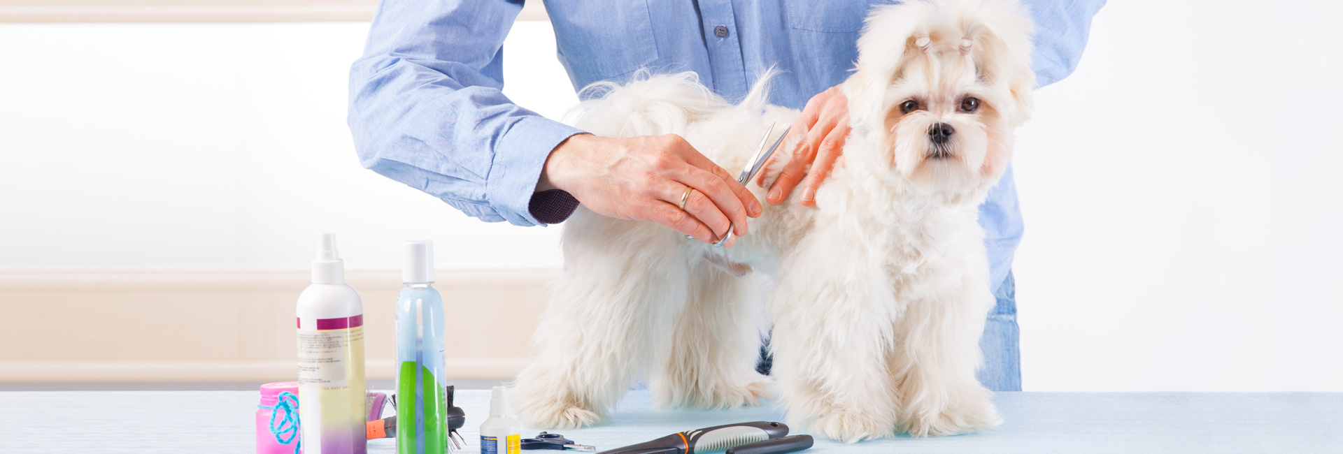 A Man Grooming a Dog